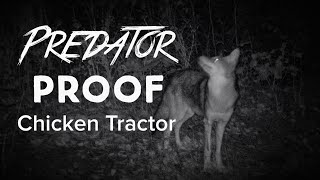 How To Make Your Chicken Tractor Predator Proof - Racoon, Possum, Coyote, Fox And Hawk Proof