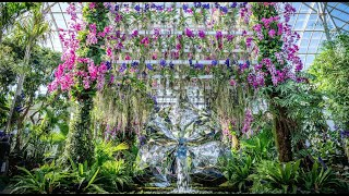 Virtual Tour Of The Orchid Show: Jeff Leathams Kaleidoscope