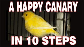 10 STEPS to a HAPPY CANARY