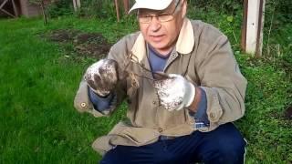 Как ловить крота на рыболовные крючки