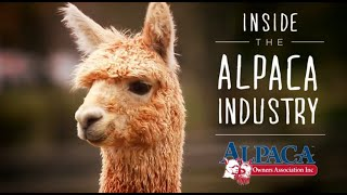 Inside the Alpaca Industry by Alpaca Owners Association, Inc.