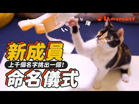 來幫小貓取名字,從此他就叫做巴努~