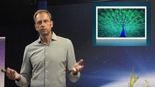 Thumbnail for video: Naturens skönhet och överdesign - Biblisk kreationism avsnitt 6 - Göran Schmidt