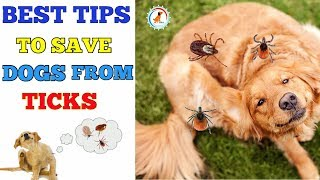 Tips To Prevent Your Dog From Ticks / In Hindi / Ways To Prevent Ticks In Dog
