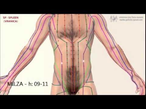 Kod ICD-10, szczelina z więzadła stawu barkowego