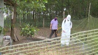 Tin Tức 24h: Quảng Trị tăng cường khống chế dịch cúm gia cầm A/H5N6