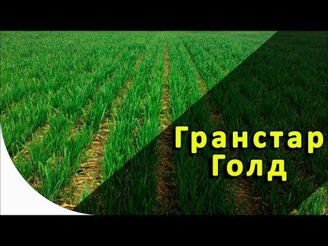 Гранстар Голд - гербицид на зерновые. Dupoun