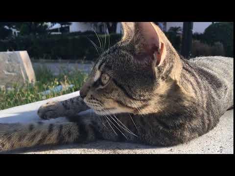 Cat lying on the bench. Кот лежит на скамейке.
