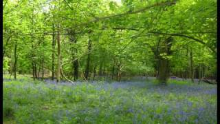 preview picture of video 'A Walk in Ashridge, Hertfordshire -2'