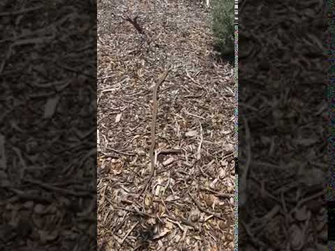 Video Of Angeles/Chilao, CA
