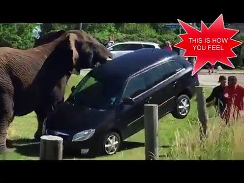 mp4 Car Insurance Elephant, download Car Insurance Elephant video klip Car Insurance Elephant