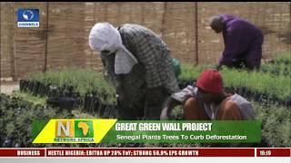 Senegal Plants Trees To Regreen The Sahel Desert  |Network Africa|