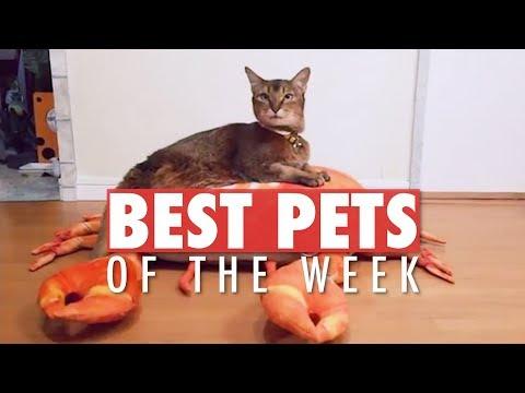 Esses são os animais mais hilários da internet!