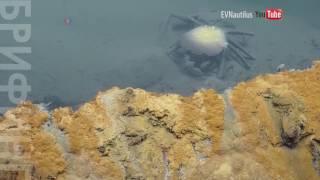 На дне Мексиканского залива нашли мертвое озеро