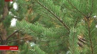 В региональном комитете лесного хозяйства подвели итоги 2015 года