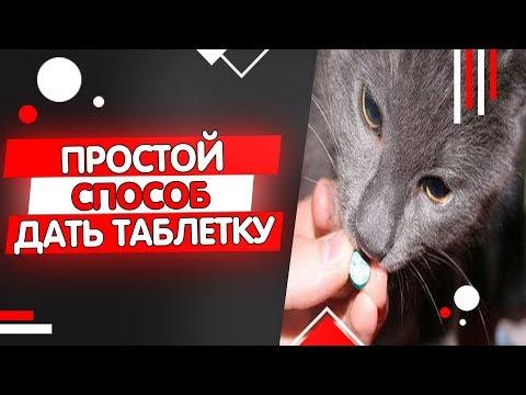Как дать коту таблетку от глистов, как часто давать таблетки от глистов