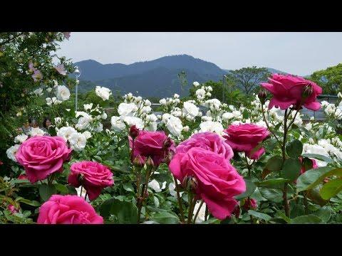 A Look at Beautiful Kayoichou Park, Japan