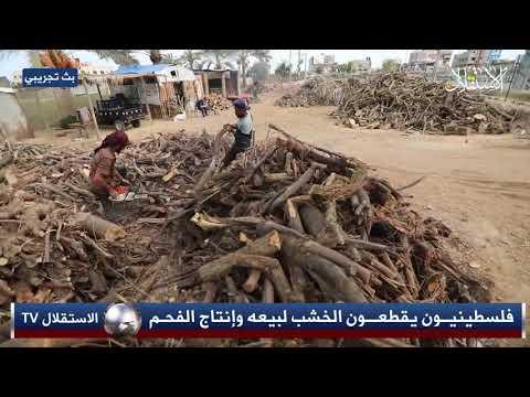 فلسطينيون يقطعون الخشب لبيعه وإنتاج الفحم