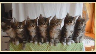 Тест на рефлексы у котят