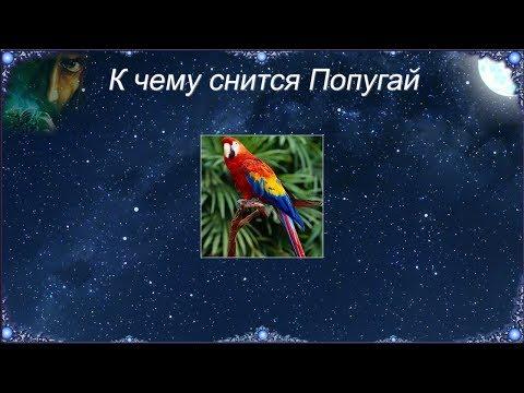 К чему снится Попугай (Сонник)