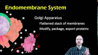 Bio 7.3.2 - The Endomembrane System And Organelle Review