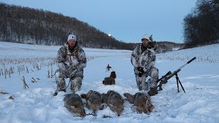 """Coyote Hunting 5 Pack Amazing Footage """"The Quad"""""""