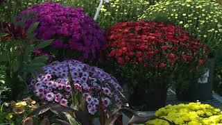 Fall Flowering Plants!
