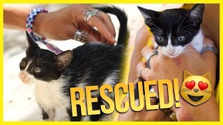 i rescued a kitten in Mexico!