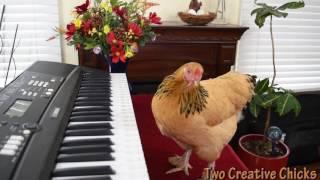 Смотреть онлайн Курица играет на пианино