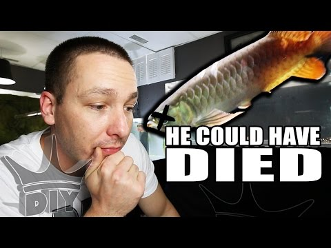 I CAN'T KEEP DOING THIS!  Aquarium disasters