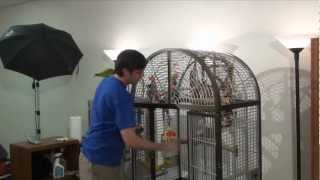 Methods for Putting Parrot Back Into Cage