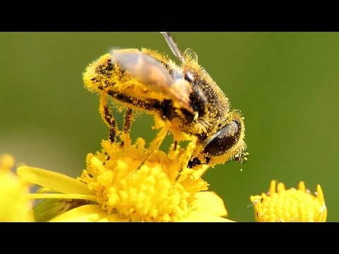 Top 10 Common Allergies