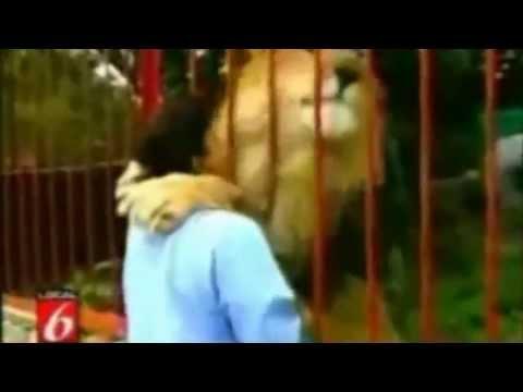 Sư tử ôm hôn cô gái ở sở thú,xem mà nổi da gà
