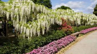 Япония, Японский парк цветов.