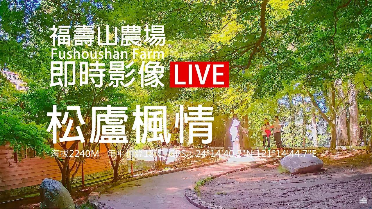 福壽山農場楓葉即時影像
