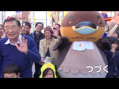 2019/03/19放送・知ったかぶりカイツブリにゅーす