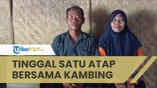 Memprihatinkan, Kisah Guru di Ngawi Tinggal Bersama Kambing, Camat Karanganyar: Saya Merasa Gagal