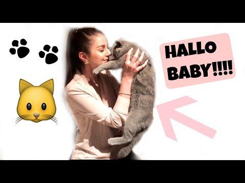 UNSER NEUES FAMILIENMITGLIED! VLOG - Abtauchen in die Sheba Katzen Welt!