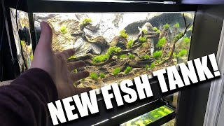 NEW aquarium is a PLANTED FISH TANK!!  The king of DIY