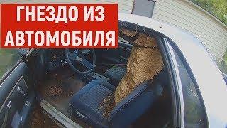 Шершни сделали гнездо из автомобиля. НЕ ДЛЯ СЛАБОНЕРВНЫХ!