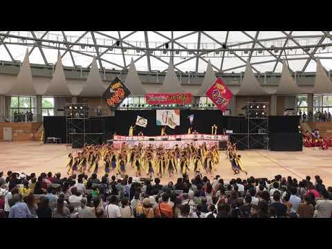 須恵心輝龍(須恵第一小学校)(ジュニアフェスタ) YOSAKOIかすや祭り 2019.10.12(土)