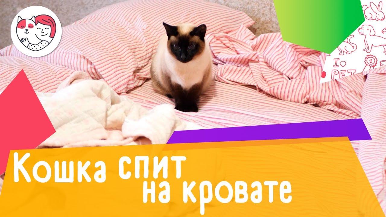4 способа отучить кошку спать на вашей кровати