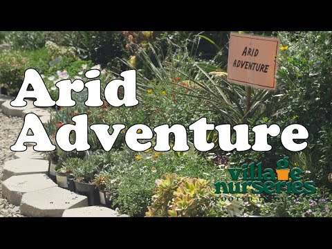Village Nurseries - Arrid Adventure