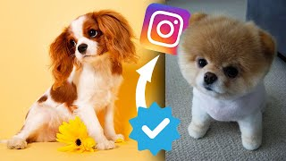 Top 10 CUTEST PETS on INSTAGRAM!