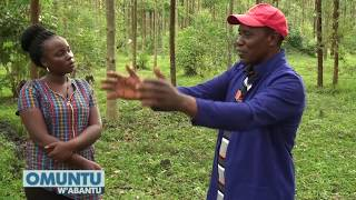 OMUNTU W'ABANTU : Tuli Ne Muhammad Kakiika    Ekitundu 2   CCC