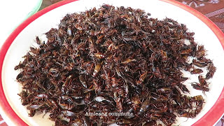 Lunch at Bopha Chhouk Roth Restaurant in Kampong Speu Province   Grill Oxen & Fry Insect in Cambodia