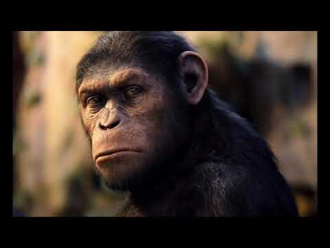 Rise of The Planet of The Apes: A Blueprint