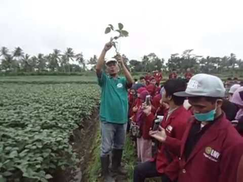 Video Lahan Kedelai Edamame Program Pembenihan
