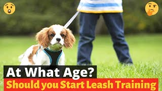 At What age should you Start Leash training a puppy? 🤔