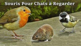 Souris Pour Chat - Vidéos Pour Les Chats à Regarder Souris